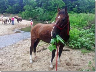 7-21-13 Indian Creek - Wy eating weeds 2